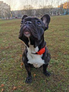 Okoskütyü, amivel megkerül az elveszett kutya